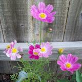 Gardening 2010, Part Two - 101_1896.JPG