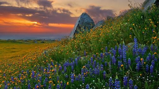 Granite Guarded Garden, Arvin, California.jpg