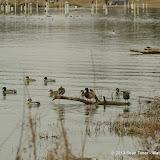 01-26-13 White Rock Lake - IMGP4353.JPG
