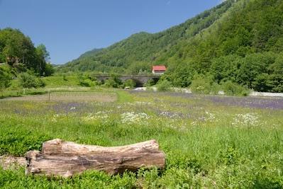 Blumenwiese im Tal der jungen Tara