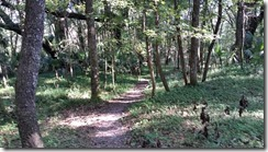 Trail view-2
