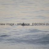 _DSC5937.thumb.jpg