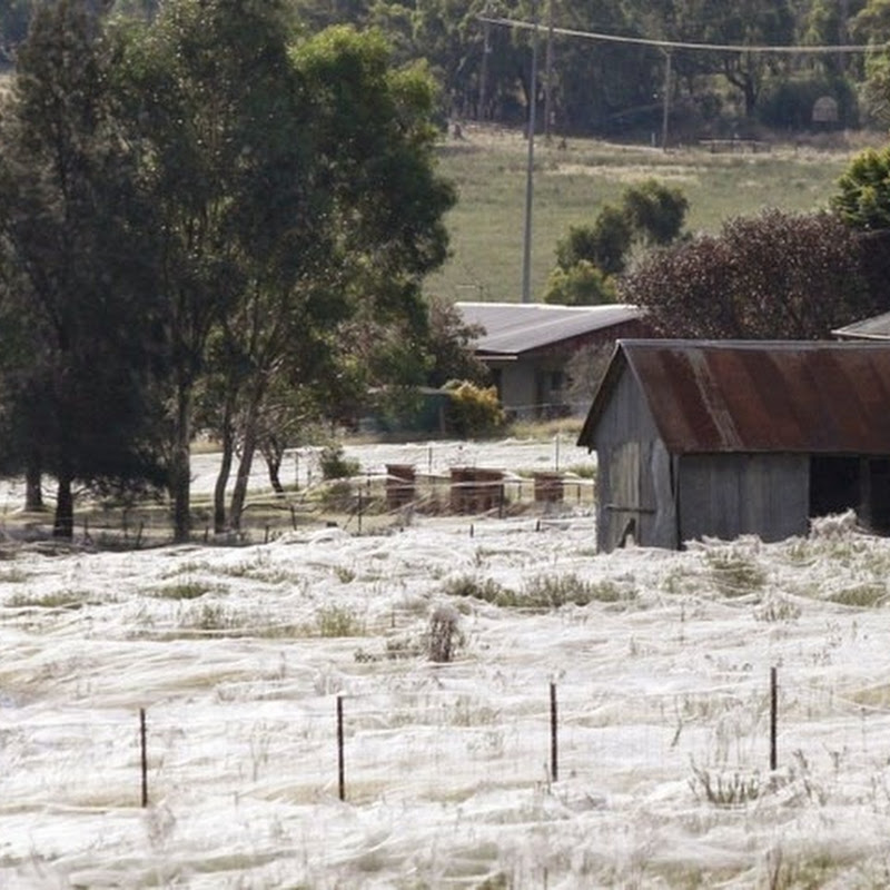 Spiders Rain Down on Australian Town