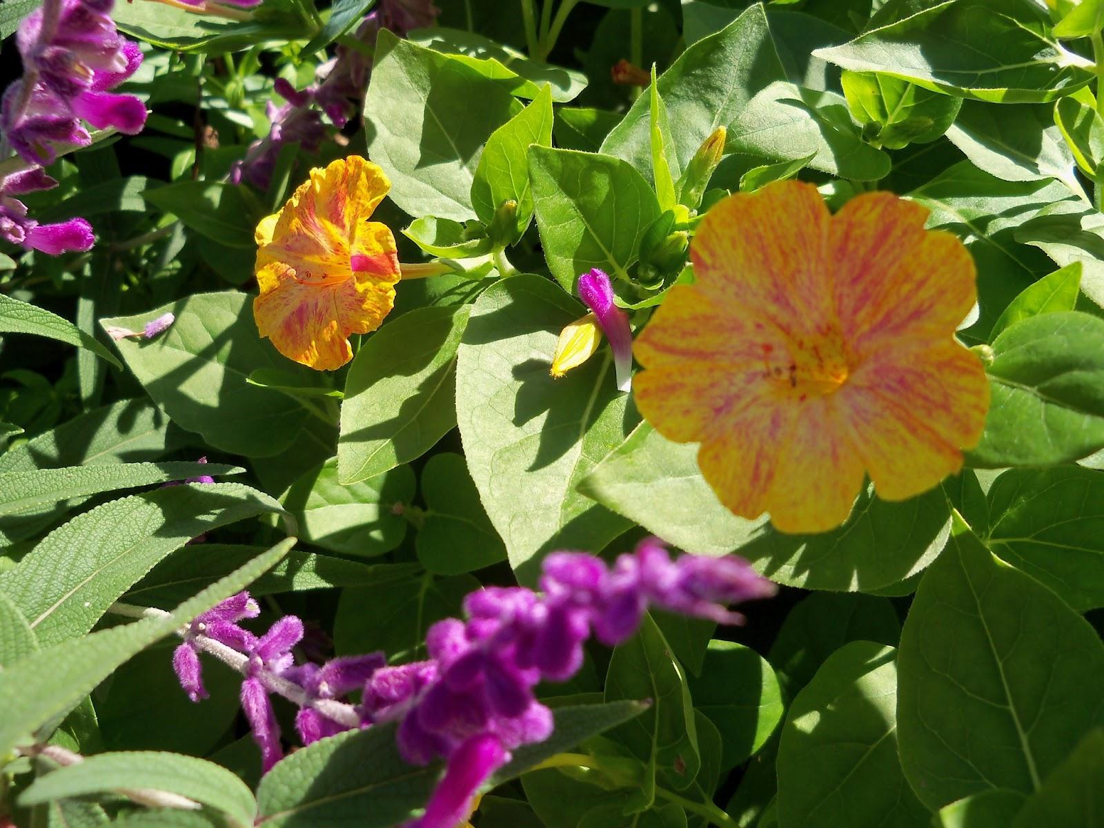 Gardening 2012 - 115_1541.JPG
