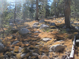 Cross-country hiking from Tuolumne to Vogelsang.