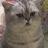 アーカイブ ArchiVe avatar image