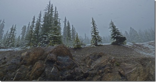 Snowing, Banff National Park