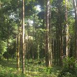 Amazone Nature Lodge, Montagne de Kaw (Guyane). 18 novembre 2011. Photo : J.-M. Gayman