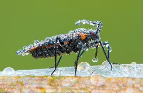 Bug in 50 Howling Examples of Dew Photography
