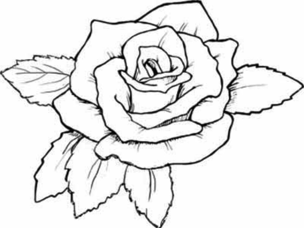 Great Rose Coloring Pages For Teenagers Gallery - Entry Level Resume ...