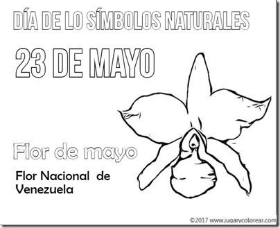 flor de mayo venezuela