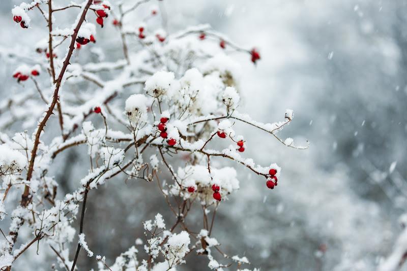 La neve cade di Tindara