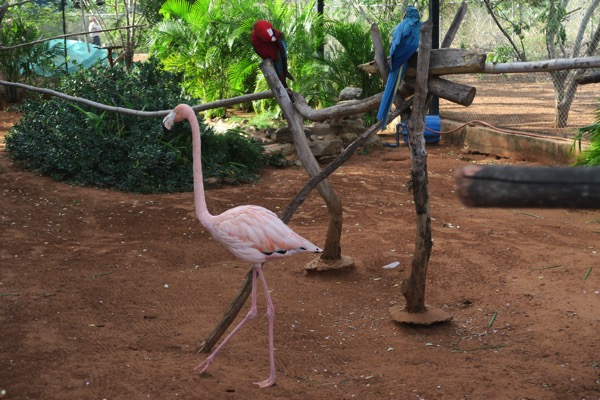 Parrots and Flamingos