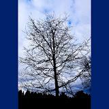 Stormy-oak_MG_2562-copy.jpg