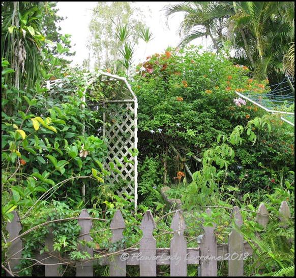 07-06-secret-gard-hedge2