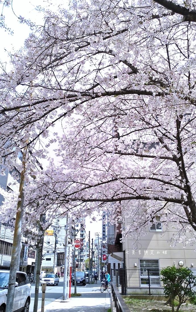 5 大阪賞櫻景點 堀江公園 味處和風亭