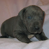 Mies boy @ 4 weeks (on pink~sorry;-)