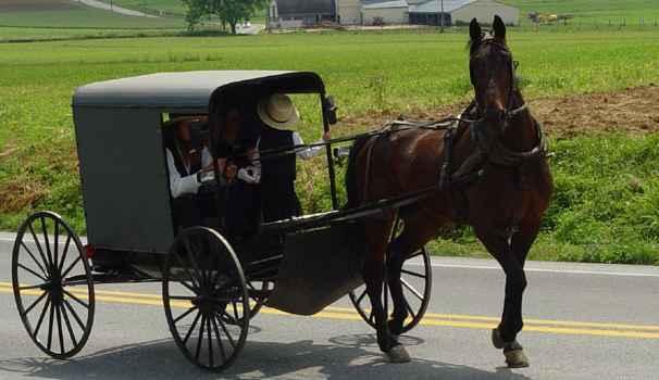 calèche Amish tirée par un cheval