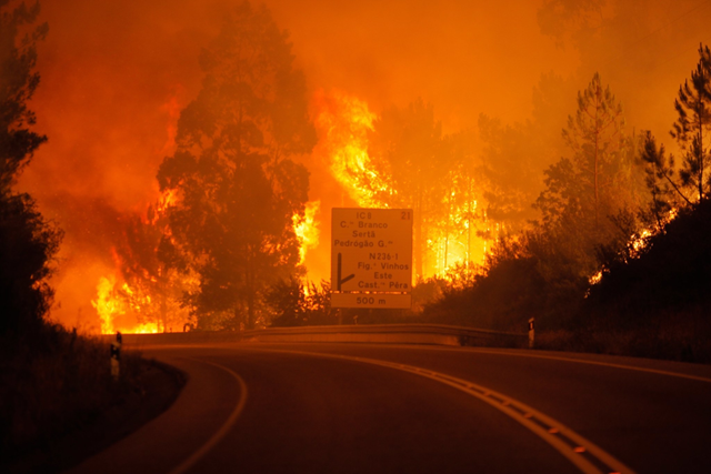 Forest fire rages on the IC8 in Portugal, on 17 June 2017. Photo: Financial Tribune
