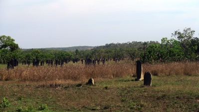 Field of Magnetic Termite Mounds