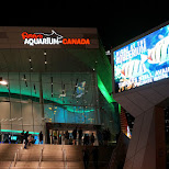 night at the aquarium in toronto in Toronto, Ontario, Canada