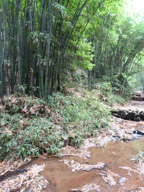 CHINE.SICHUAN.YIBIN, et la mer de Bambous - 1sichuan%2B511.JPG