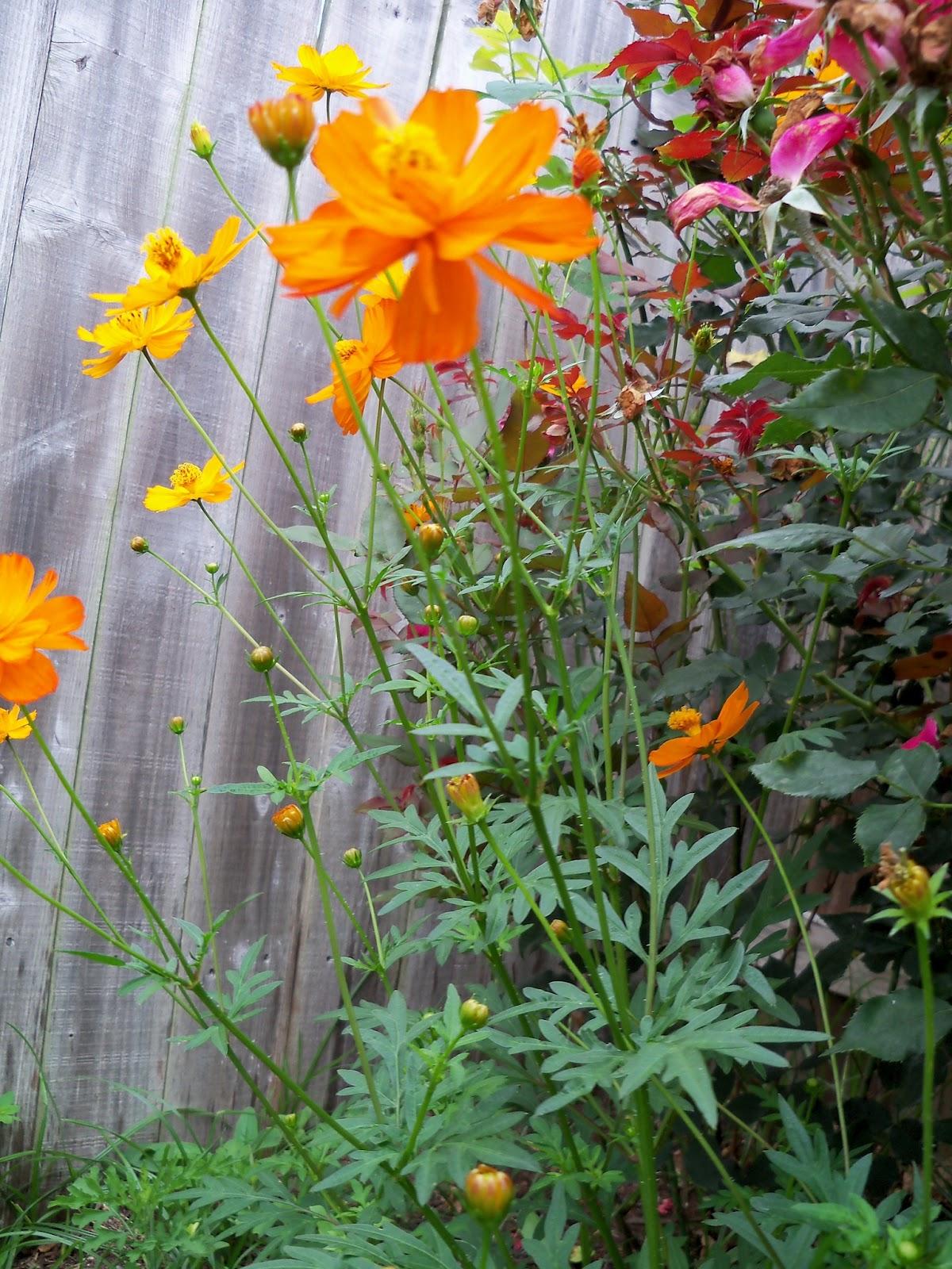 Gardening 2012 - 115_1983.JPG