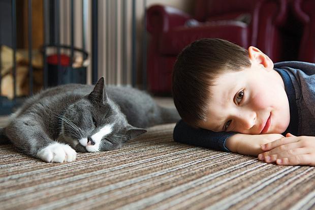 kucing dan anak laki-laki