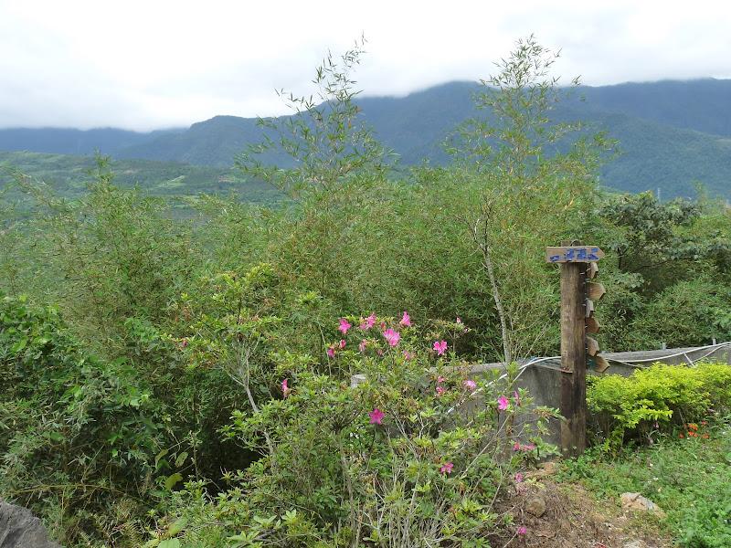 TAIWAN . Hualien et au Sud de Hualien,presque jusqu à Taitung - P1160865.JPG