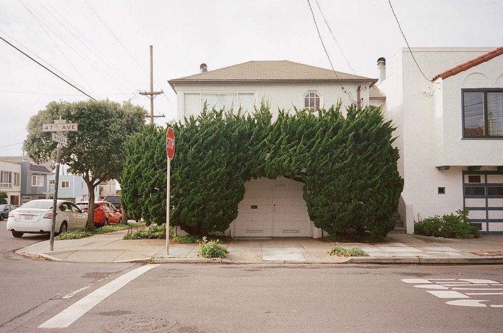 kelsey-mcclellan-topiary-3