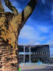 K800i: Natur gegen moderne Architektur
