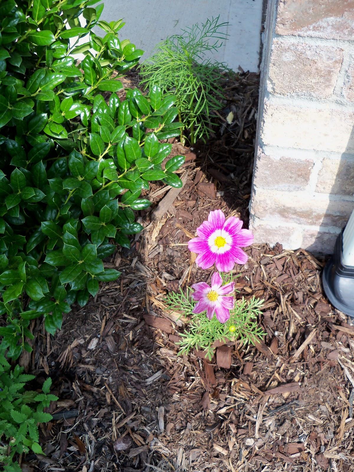 Gardening 2010, Part Two - 101_1980.JPG