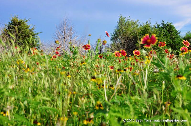 05-26-14 Texas Wildflowers - IMGP1398.JPG