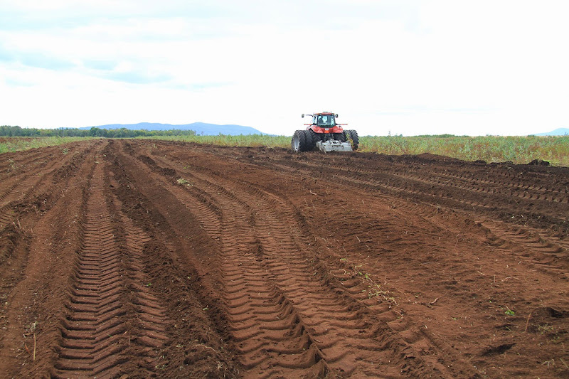 Transformation branchailles en terre agricole - Transformation-de-branchailles-en-terre-agricole-8.jpg