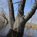 Река Усманка весенний паводок 030.jpg