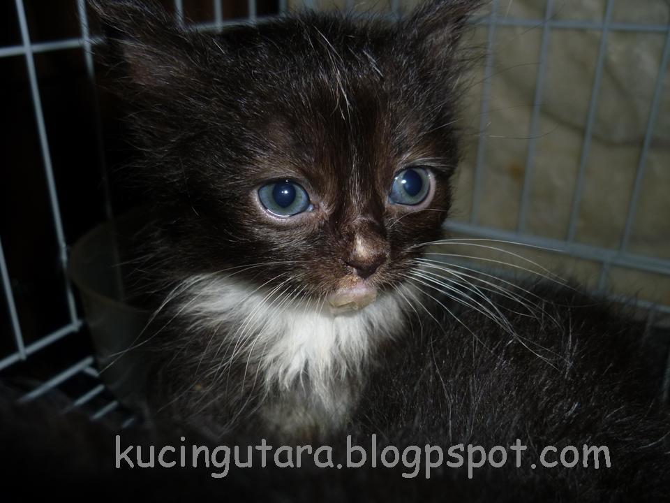 Nama Anak Kucing Comel 81021 Nama Untuk Kucing Comel Lucu Dan Unik