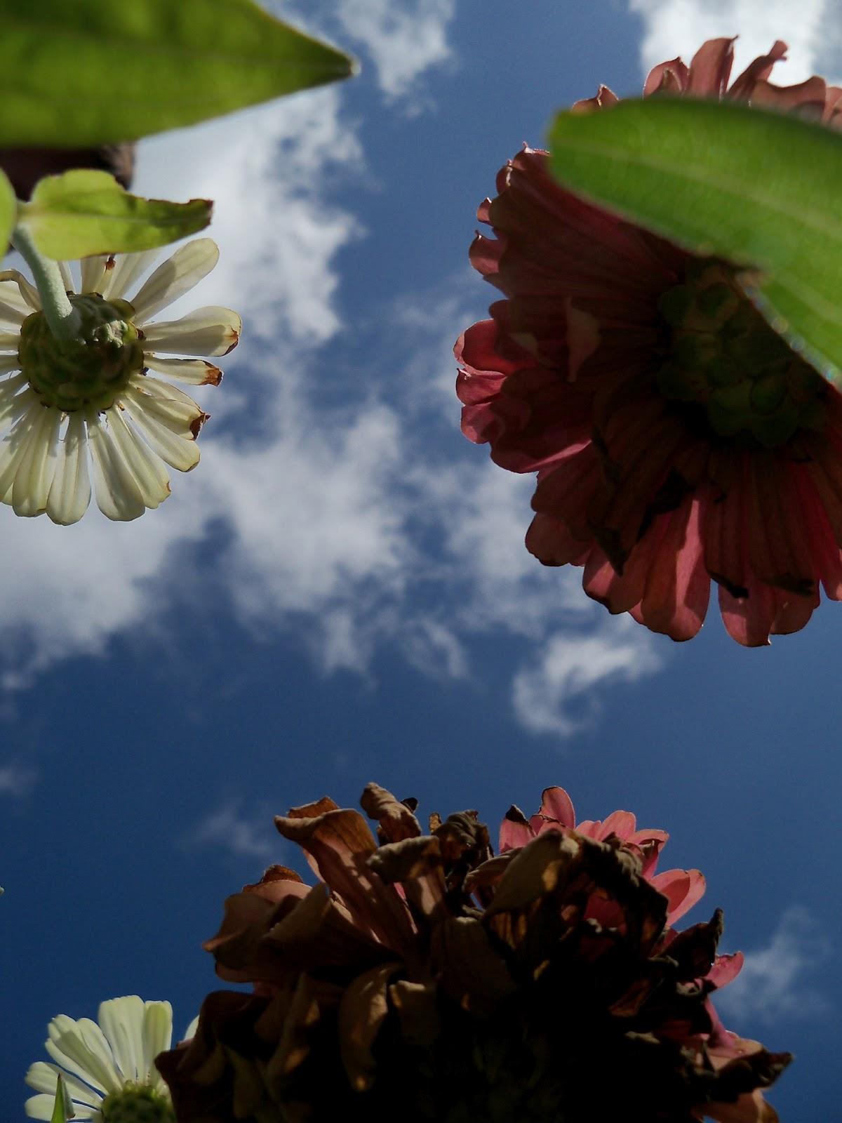 Gardening 2011 - 100_9974.JPG