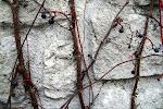 Parc de Belleville : fossiles