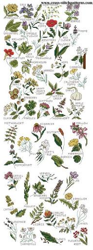 Herbs chart