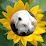 Benjamin Zhao (Ben 和 Lucy)'s profile photo