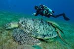 EG_Oasis_turtle.jpg