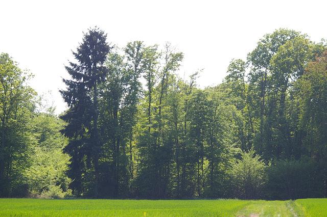 Hautes-Lisières (Rouvres, 28), 22 avril 2011. Photo : J.-M. Gayman