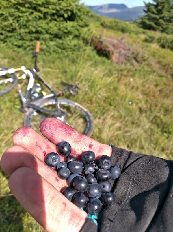 Sus pe munte s-au facut afinele, si zmeura asa ca in orice tura e acum inainte ar trebui luate in calcul si pauze destul de lungi de cules fructe de padure.