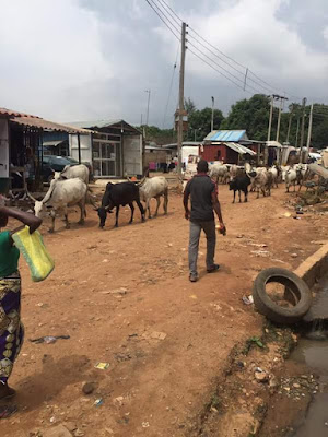 Fulani Herdsmen And Their Cattle Take Over Durumi,Abuja(PHOTOS)