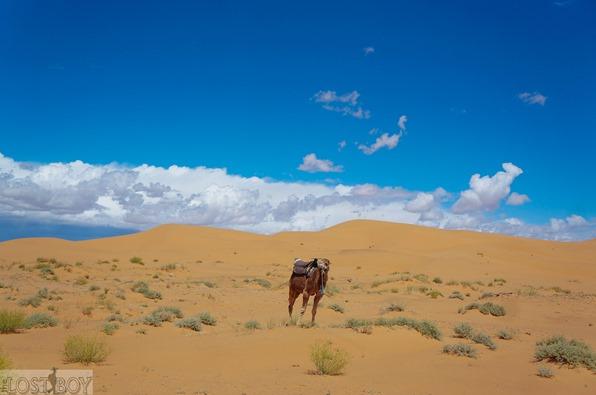 sahara desert-13