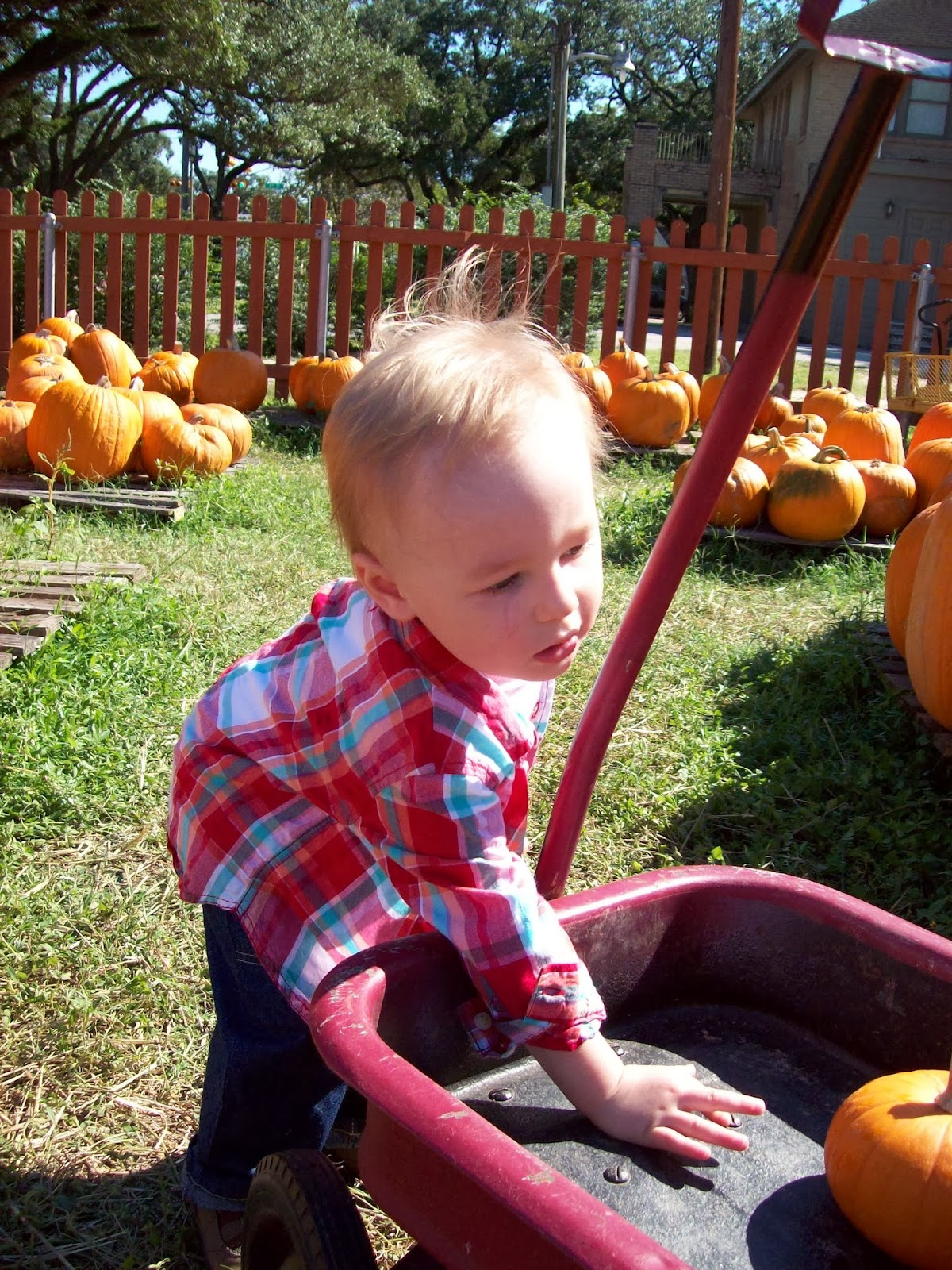 Pumpkin Patch - 114_6567.JPG