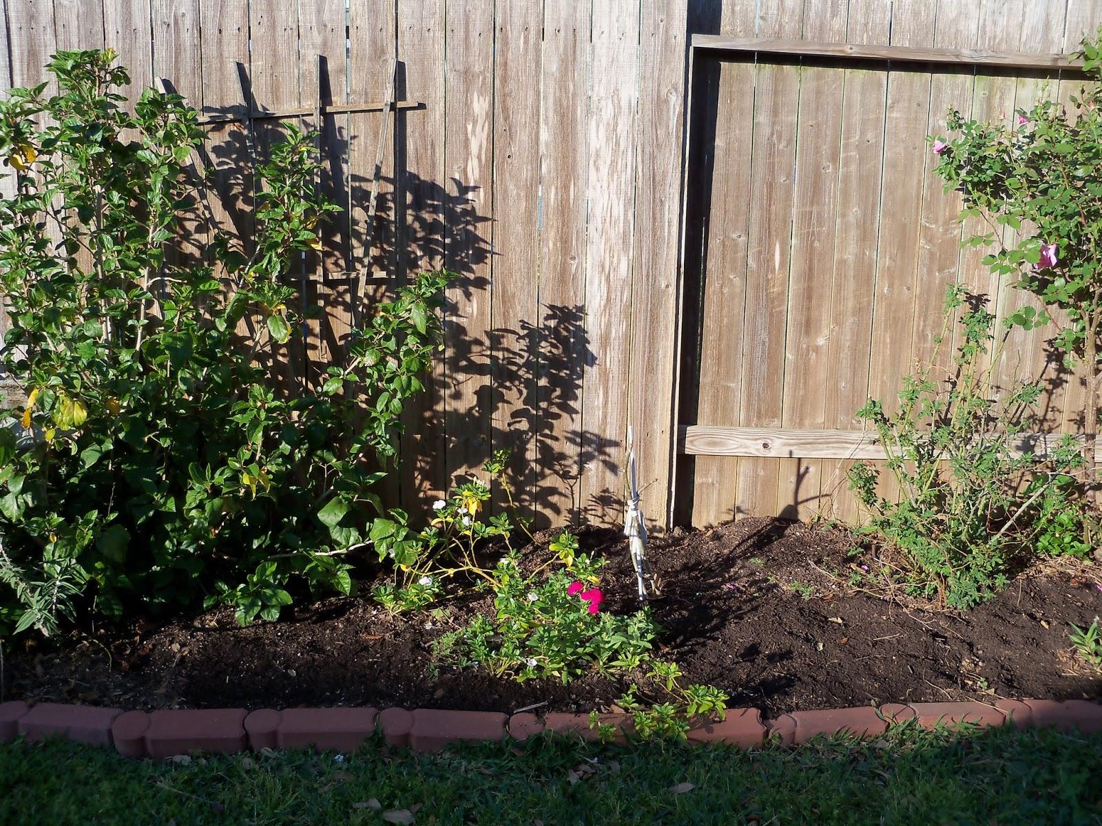 Gardening 2013 - 115_5366.JPG