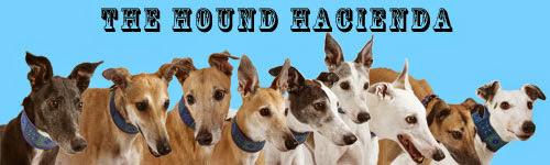 8-14-hound-siggy.jpg?gl=US