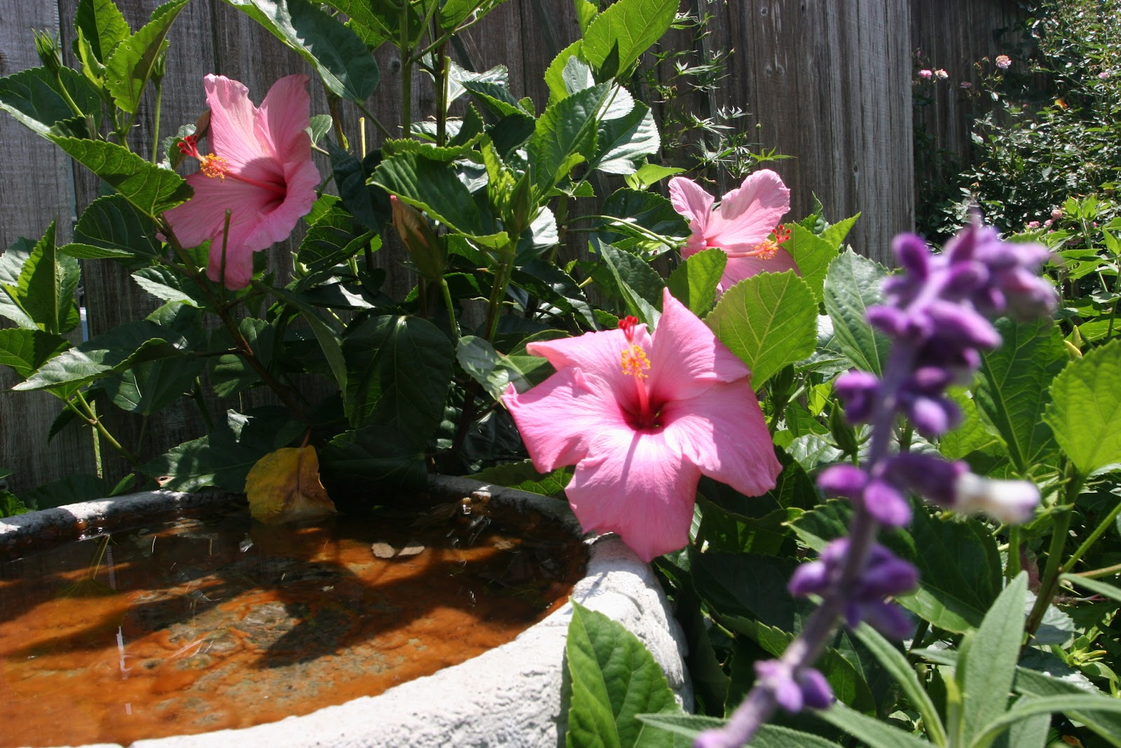Gardening 2012 - IMG_3833.JPG