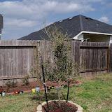 Gardening 2010 - 101_0425.JPG